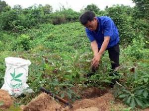 Việc bón phân ảnh hưởng lớn đến độ phì nhiêu đất trồng