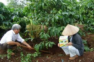 Khảo sát quan hệ giữa đất, phân bón và cây trồng