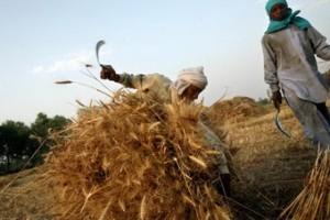 Phân bón là yếu tố chính tạo nên cách mạng xanh của Ấn Độ
