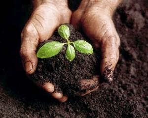 Hỏi - đáp: đất và cây trồng